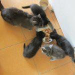 Małe kotki do adopcji