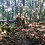 Właśnie trwa dewastacja lasu w sercu Bieszczad – Hyrlata