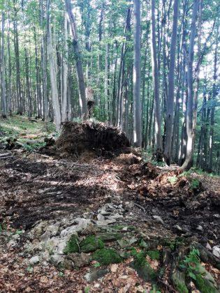 IMG 20170808 162820 315x420 - Właśnie trwa dewastacja lasu w sercu Bieszczad - Hyrlata