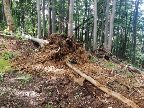 IMG 20170808 162940 560x420 - Właśnie trwa dewastacja lasu w sercu Bieszczad - Hyrlata