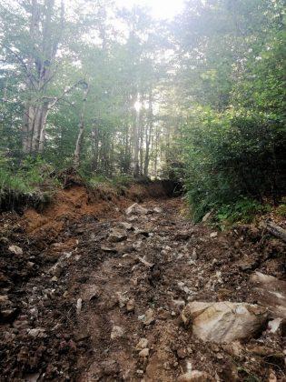 IMG 20170808 212040 315x420 - Właśnie trwa dewastacja lasu w sercu Bieszczad - Hyrlata