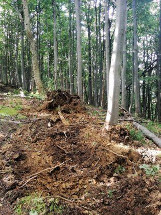 IMG 20170808 212219 315x420 - Właśnie trwa dewastacja lasu w sercu Bieszczad - Hyrlata