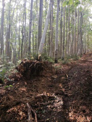 IMG 20170808 212346 315x420 - Właśnie trwa dewastacja lasu w sercu Bieszczad - Hyrlata