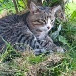 Zagniony Groszek i podziękowania od OTOZ-Animals