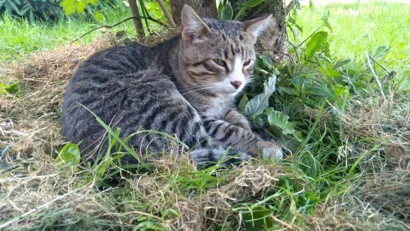 groszek - Zagniony Groszek i podziękowania od OTOZ-Animals