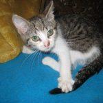 Koty, psy do adopcji, zaginione