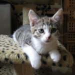 Rysia i Alma – kotki do adopcji