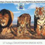 17 lutego to Światowy Dzień Kota