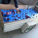 Usiłowali przemycić 160 kg kawioru z jesiotra syberyjskiego