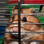 Czy market budowlany to dobre miejsce dla zwierząt?