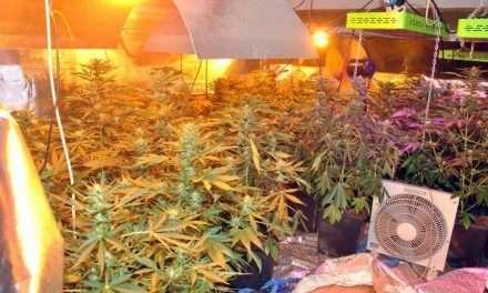 Narkotyki warte blisko 90 tysięcy