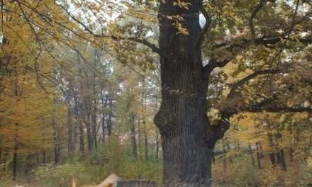 XVI edycja Święta Drzewa