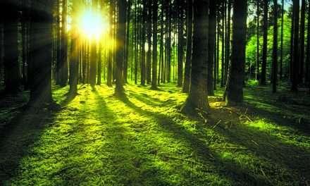 Ekolodzy chcą parku narodowego. Leśnicy mówią stanowcze NIE