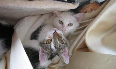 Znaleziono kotkę…