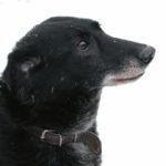 dunaj pies 150x150 - Dunaj – przyjaciel od zaraz