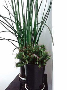 kwiaty w domu 3 225x300 - Zielone płuca domu