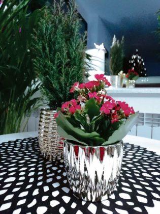 kwiaty w domu 5 315x420 - Zielone płuca domu