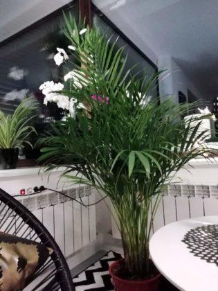 kwiaty w domu 6 315x420 - Zielone płuca domu