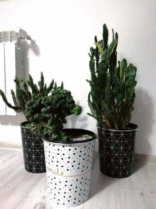 kwiaty w domu 8 315x420 - Zielone płuca domu