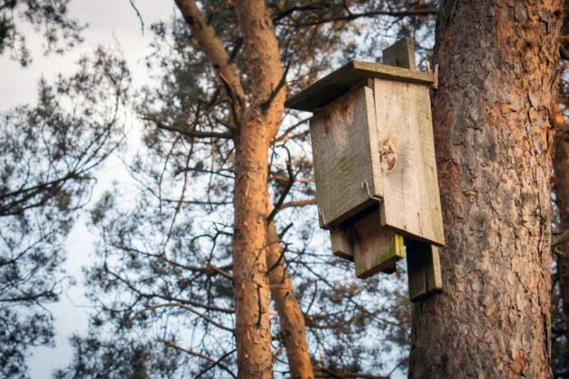 budki dla ptaków 1 630x420 - Kto w Sanoku zrobi budki lęgowe dla ptaków?
