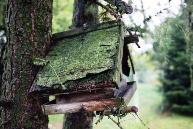 budki dla ptaków 5 630x420 - Kto w Sanoku zrobi budki lęgowe dla ptaków?