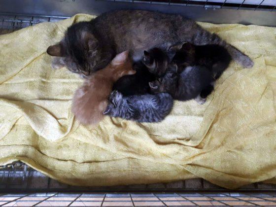 """koty 1 560x420 - Małgosia Murawska z""""Kociej Zagrody"""" zŁukawicy potrzebuje pomocy"""