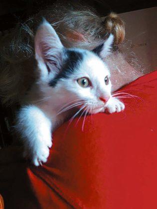 """koty 3 315x420 - Małgosia Murawska z""""Kociej Zagrody"""" zŁukawicy potrzebuje pomocy"""