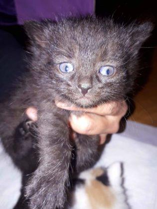 """koty 4 315x420 - Małgosia Murawska z""""Kociej Zagrody"""" zŁukawicy potrzebuje pomocy"""