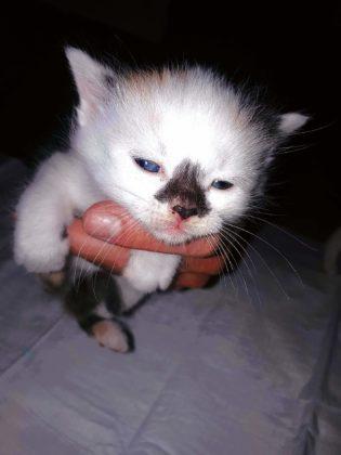 """koty 6 315x420 - Małgosia Murawska z""""Kociej Zagrody"""" zŁukawicy potrzebuje pomocy"""