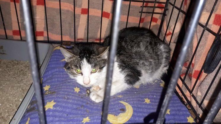 Azyl dla kotów: Kocia Zagroda w Łukawicy