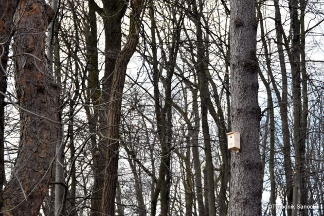 budki lęgowe park w Sanoku 3 630x420 - Małe, a cieszy. Budki lęgowe w sanockim parku