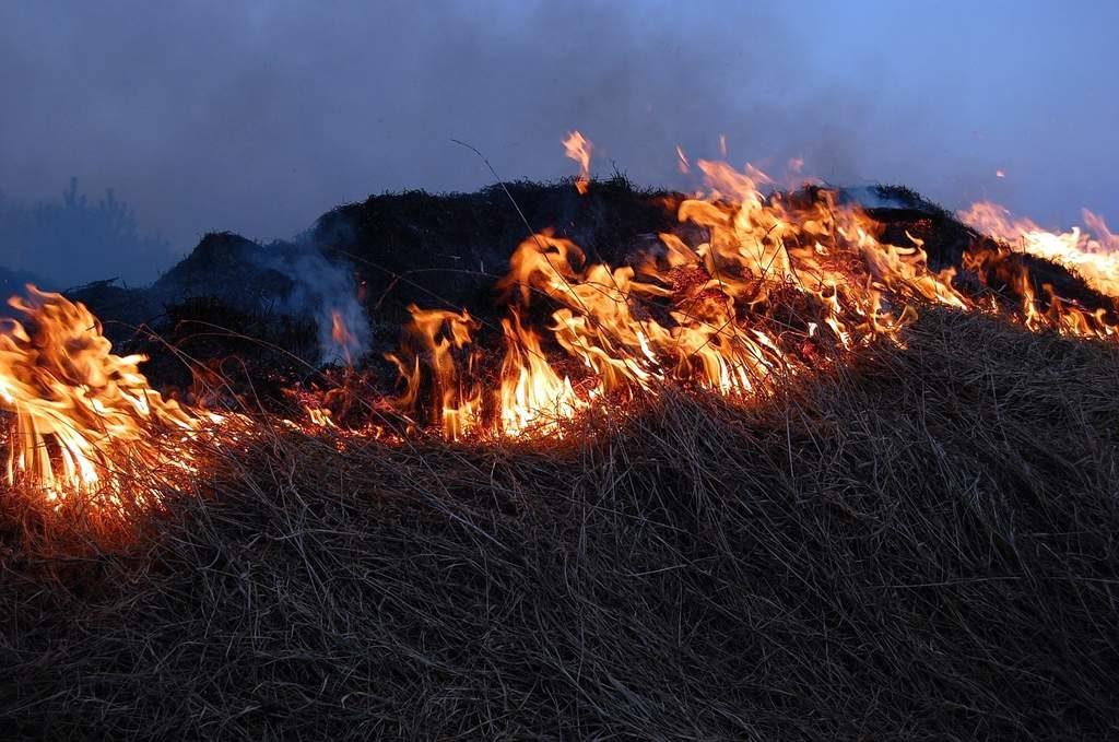 wypalanie traw 1 1024x679 - Wypalanie traw zabija