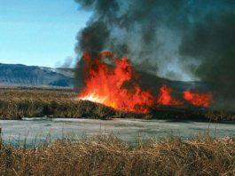 Wypalanie traw zabija