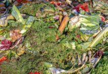 Branża śmieciowa apeluje o rozwiązania dla bioodpadów. Kłopotliwa frakcja