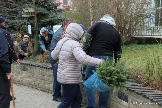 drzewko dla sanoczan 7 630x420 - Drzewko dla Sanoczan