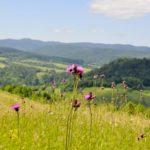 Przejście graniczne pod Tarnicą będzie otwarte w majówkę