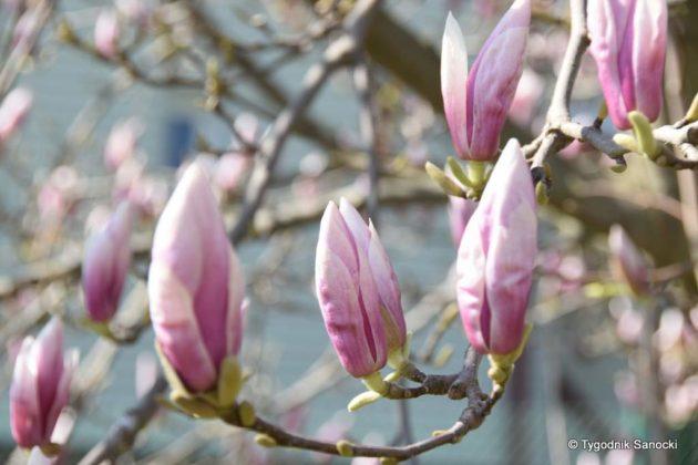 wiosna 1 1 630x420 - Wytropiliśmy wiosnę
