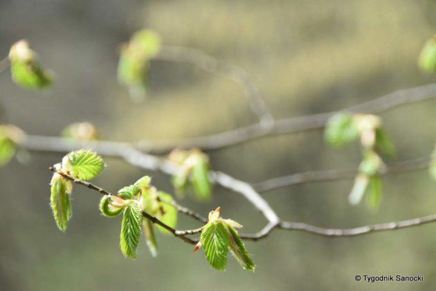 wiosna 7 630x420 - Wytropiliśmy wiosnę