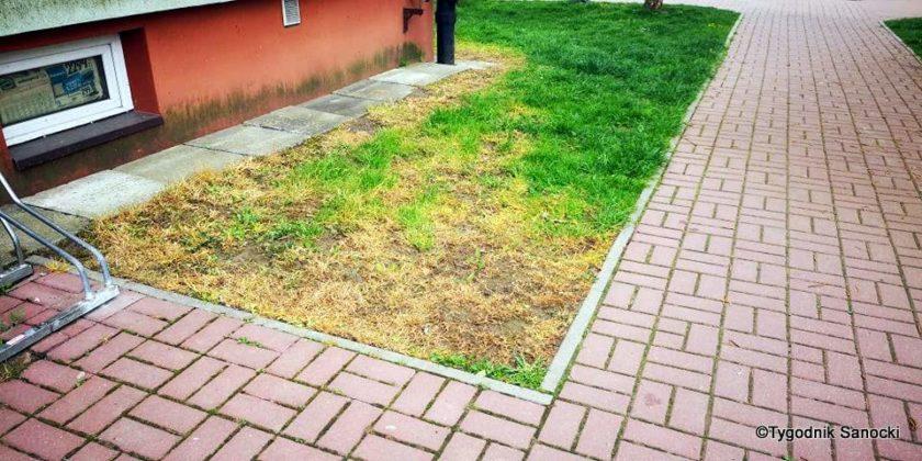 Trawniki pod blokami wypalane Roundupem 10 840x420 - Trawniki pod blokami wypalane Roundupem?