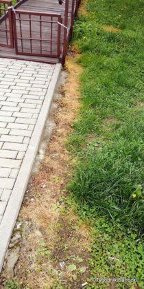 Trawniki pod blokami wypalane Roundupem 14 210x420 - Trawniki pod blokami wypalane Roundupem?
