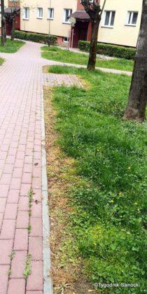 Trawniki pod blokami wypalane Roundupem 19 210x420 - Trawniki pod blokami wypalane Roundupem?