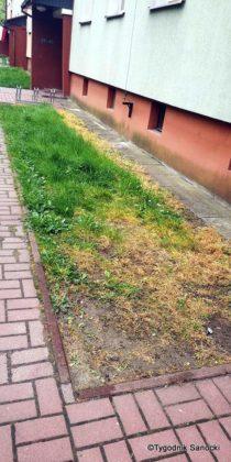 Trawniki pod blokami wypalane Roundupem 2 210x420 - Trawniki pod blokami wypalane Roundupem?