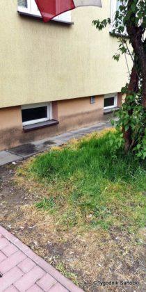 Trawniki pod blokami wypalane Roundupem 20 210x420 - Trawniki pod blokami wypalane Roundupem?