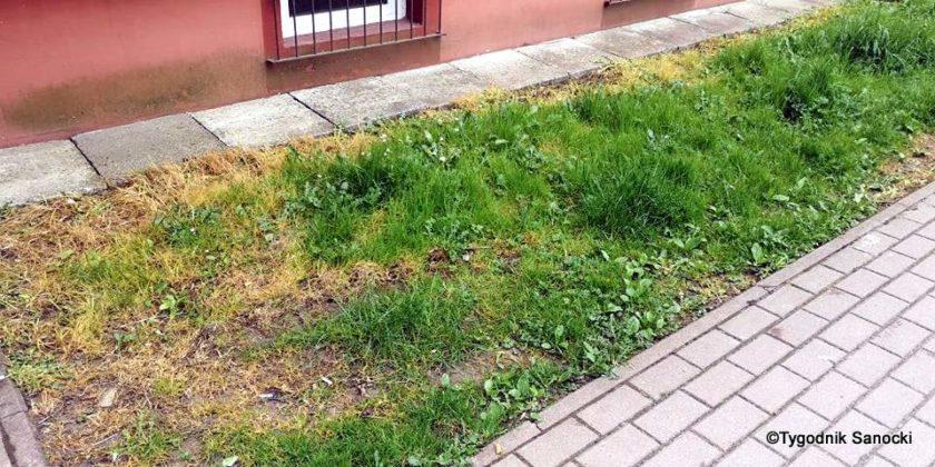 Trawniki pod blokami wypalane Roundupem 21 840x420 - Trawniki pod blokami wypalane Roundupem?