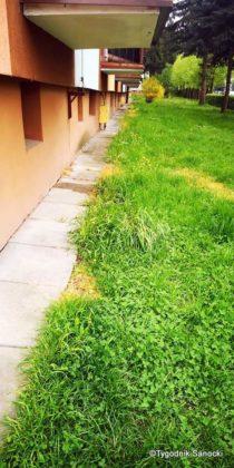 Trawniki pod blokami wypalane Roundupem 22 210x420 - Trawniki pod blokami wypalane Roundupem?