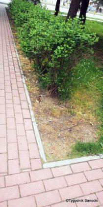 Trawniki pod blokami wypalane Roundupem 23 210x420 - Trawniki pod blokami wypalane Roundupem?