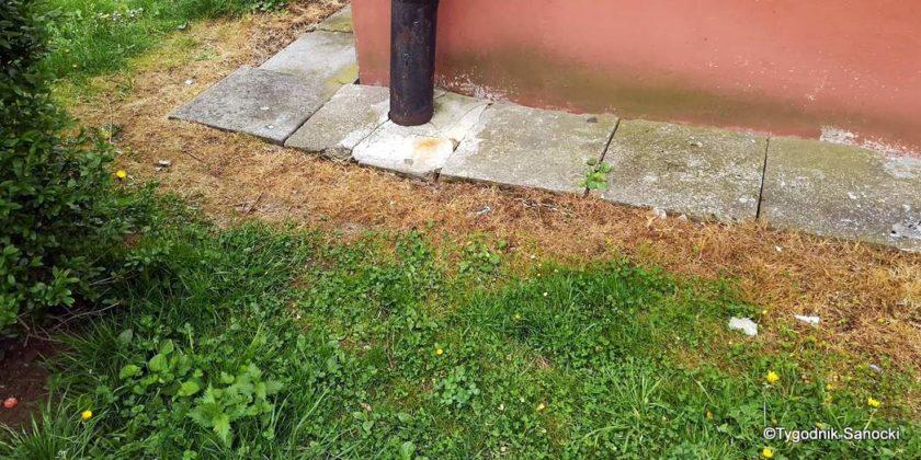 Trawniki pod blokami wypalane Roundupem 24 840x420 - Trawniki pod blokami wypalane Roundupem?