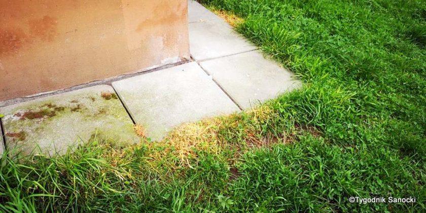 Trawniki pod blokami wypalane Roundupem 26 840x420 - Trawniki pod blokami wypalane Roundupem?