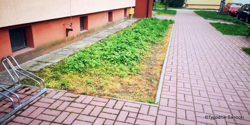 Trawniki pod blokami wypalane Roundupem 27 840x420 - Trawniki pod blokami wypalane Roundupem?