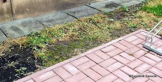Trawniki pod blokami wypalane Roundupem